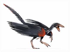 Archaic Meaning on Urvogel Original Bird Or First Bird Is The Earliest And Most Primitive