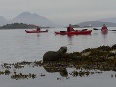 kayaking in scotland with the otters