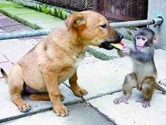 This monkey is feeding a dog! It is precious.