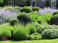 Ein schönes Schattenspiel ergibt sich bei dieser überwiegend kugeligen Bepflanzung mit Eibe, Lavendel, Frauenmantel, Gras und Perovskia. - Essen-Nord