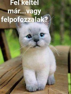 Funny Art, Funny Jokes, Kittens Cutest, Animals And Pets, Good Morning, Like4like, Lol, Comics, Memes