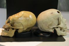Nephilim Skull Comparison