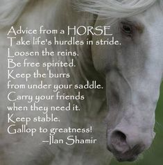 Advice from a HORSE, I'm printing this for my horse girl Isabelle! My Horse, Horse Love, Horse Girl, Horse Tack, Pretty Horses, Beautiful Horses, Majestic Horse, Yorkies, Inspirational Horse Quotes
