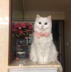 Such a beautiful kittty Click the Photo For More Adorable and Cute Cat Videos and Photos I Love Cats, Crazy Cats, Cool Cats, Pretty Cats, Beautiful Cats, Baby Animals, Cute Animals, Love Your Pet, Cute Cat Gif