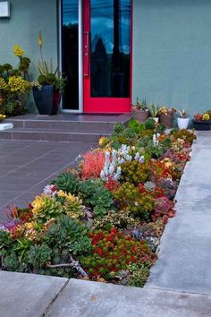 - Sukkulenten in verschiedenen Farben im Vorgarten Succulents in different colors in the front yard Low Water Landscaping, Succulent Landscaping, Succulent Gardening, Landscaping With Rocks, Front Yard Landscaping, Planting Succulents, Backyard Landscaping, Landscaping Ideas, Organic Gardening