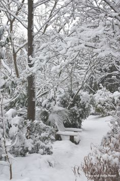 JLBG Woodland Garden in snow