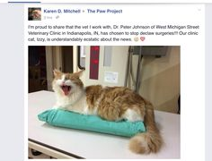 THIS VETERINARIAN STOPPED DECLAWING CATS!!!