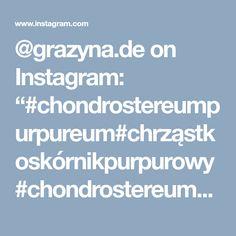 "@grazyna.de on Instagram: ""#chondrostereumpurpureum#chrząstkoskórnikpurpurowy#chondrostereum#ziarnoskórnikpurpurowy#grzyby#гриб#grzyb#setas#mushrooms#hongos#fungi#fun…"" • Instagram"