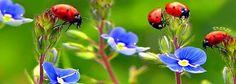 s Ladybugs, Fish, Pets, Animals, Animales, Animaux, Ladybug, Pisces, Animal