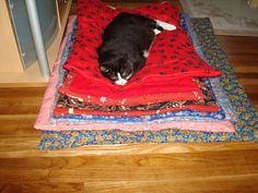 Kennel Quilts except the cat decided he wanted them