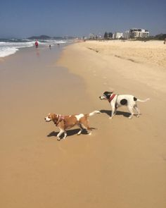 Sally and Mitzy had so much fun at the beach today!