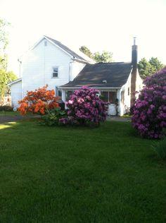 Our back yard - Spring 2015 - Carrollton Ohio