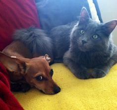 My pup and kitty :)