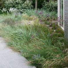 Wild plant mix based native planting in the dunes Beach Gardens, Outdoor Gardens, Modern Planting, Where The Sun Sets, Wild Grass, Foundation Planting, Water Element, Outdoor Rooms, Outdoor Living
