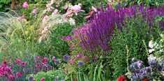 Unfussy and long-lived, perennials pump out beautiful foliage and flowers year after year Garden Yard Ideas, Backyard Garden Design, Garden Tips, Best Perennials, Flowers Perennials, Summer Blooming Flowers, Landscaping With Rocks, Landscaping Ideas, Farmhouse Landscaping