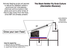black soldier fly farming - Google Search