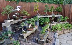 Bonsai display using concrete blocks and railway sleepers