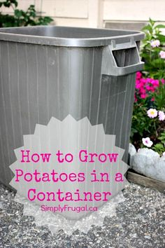 Did you know you can grow potatoes in a container?  Its true!  You can grow potatoes in a container and Im going to attempt to show you how to do it with the video below.  Growing potatoes in a container is ideal if you have limited gardening space...
