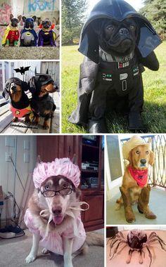 30+ Dog Halloween Costumes