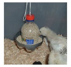 DIY Plastic Bottle Chick Feeder - Made from two soda plastic bottles, simple diy project.