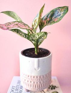 The Chinese evergreen filters out allergens in your home office. Desk Height, Stand Up Desk, Color Psychology, Home Office Design, How To Run Longer, Natural Light, Things To Think About, Home Goods, Finding Yourself