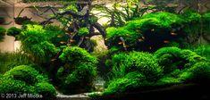 """Moss Canyon"" (180L) by Jeff Miotke. PLANTS:Microsorum Pteropus (Needleleaf), Hemianthus Callitrichoides, Riccardia Chamedryfolia, Mini Rose Moss,Taxiphyllum sp. Flame Moss, Taxiphyllum sp. Java, Fissidens Nobilis,Fissidens Geppi,Lilaeopsis Brasiliensis, Lilaeopsis Mauritiana, Riccia Fluitans, Subwassertang. FISH/ANIMALS: Ember Tetras, Pygmy Corydoras, Red Cherry Shrimp."