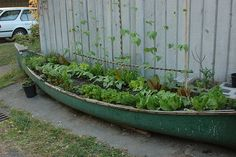 boat garden  this would be a brilliant way to have a 'salad' garden even in a small garden, or shared yardage like in the back yard of an apartment or even the sunny side of a garage--love it.