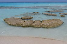 Stromatolite - Oldest organisms