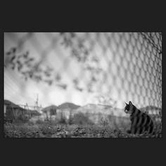 Ruby April 2015 #cat #blackandwhitephotography