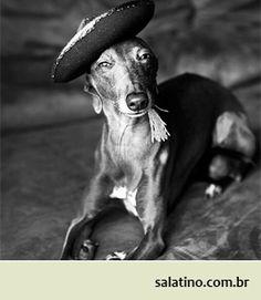 What's your Greyhound's Style? #dog #salatino #clubesalatino #canil #perro #dogs #cute #love #nature #animales #dog #ilovemydog #ilovemypet #cute #galgos #greyhound #galgoespanhol #galgo