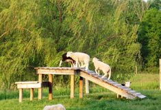 Goat climbing structure