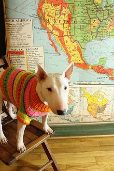 I can't stop laughing. Can I crochet Jazzy a sweater and put her by a map that matches?