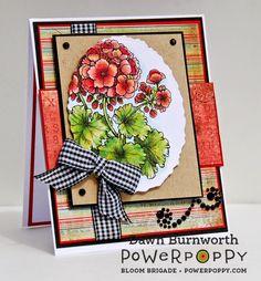 Power Poppy's Geraniums