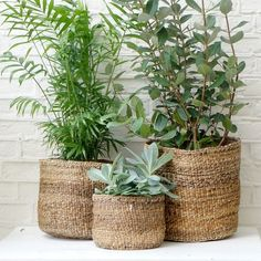 Idea Of Making Plant Pots At Home // Flower Pots From Cement Marbles // Home Decoration Ideas – Top Soop Plant Basket, Basket Planters, Planter Pots, Baskets For Plants, Home Decor Baskets, Basket Decoration, House Plants Decor, Plant Decor, Potted Plants