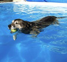 Keeping Your Senior Dog Active Helping Dogs, Gray Matters, Like Animals, Old Dogs, Poodles, Go Outside, Dog Love, Exercises, Handle