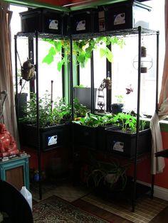 Growing Crops in My Window | GOMI Style