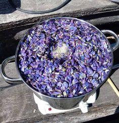 Ämpärillinen lupiininkukkia, vesi ja 150 g villalankaa. Acai Bowl, Lana, Blueberry, Feelings, Knitting, Handmade, Ideas, Dyes, Acai Berry Bowl