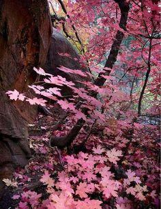 ~Autumn~ Aubergine & Matte Fuschia Fairy Tale . . .