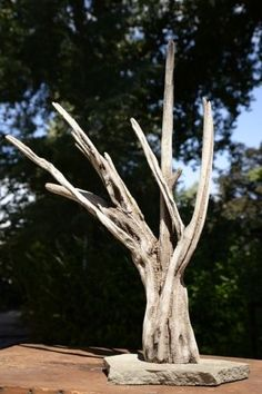 """Tiny Ancient Tree. 19 1/2"""" x 15"""" x  6"""" Natural Driftwood craggy branch/perch, slate mounted to sink immediately in Aquarium or to sit inside or on top of bird cage as a perch. Please zoom on pics to see the curves, twists and coloring on the trunk. Interesting shelf art. Too tall for a standard 29 gal 18"""" tank/terrarium/cage but the top branch can be cut to fit if you request and we can try our hardest to sand and blend the tip to match the other branches. We are unsure what this wood is but…"""