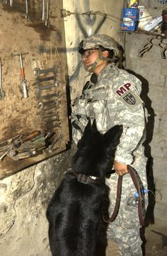 dogs working in iraq - Google Search
