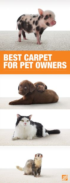 You can't always control your pets, but you can pet-proof your carpet. Your floors will remain stain-free no matter the mess with LifeProof carpet with PetProof technology. A warranty that covers any stain and an assortment of colors make this carpet a must-have for pet owners. Click to learn more.