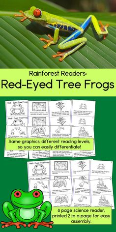 Rain Forest Readers: Red-Eyed Tree Frogs Rainforest Classroom, Rainforest Activities, Frog Activities, Rainforest Theme, Amazon Rainforest, Reading Groups, Reading Levels, Guided Reading, Teaching Main Idea