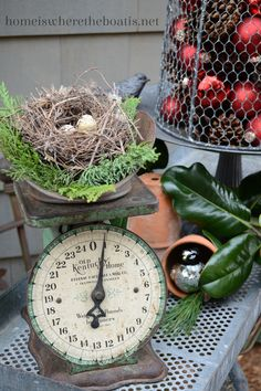 Vintage kitchen scale with bird's nest perched atop. Perfection.