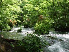 奥入瀬渓流の夏写真1