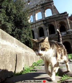 Rome is famous for its cats colonies <3