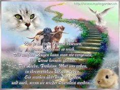 Tier Fotos, Dog Memorial, Rainbow Bridge, In Loving Memory, Pet Memorials, Timeline Photos, True Friends, Dear Friend, Beagle