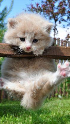 Grass Kitten