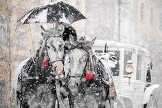 ,Brrrrr !     Winter Horses  Winter Wonderland by Agencja Gazeta.