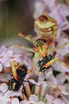 Amazing Alien Insects Up Close | Cool Things