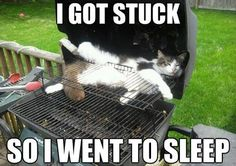 funny cat meme with a picture of a cat in an outdoor grill and the caption I got stuck so I went to sleep